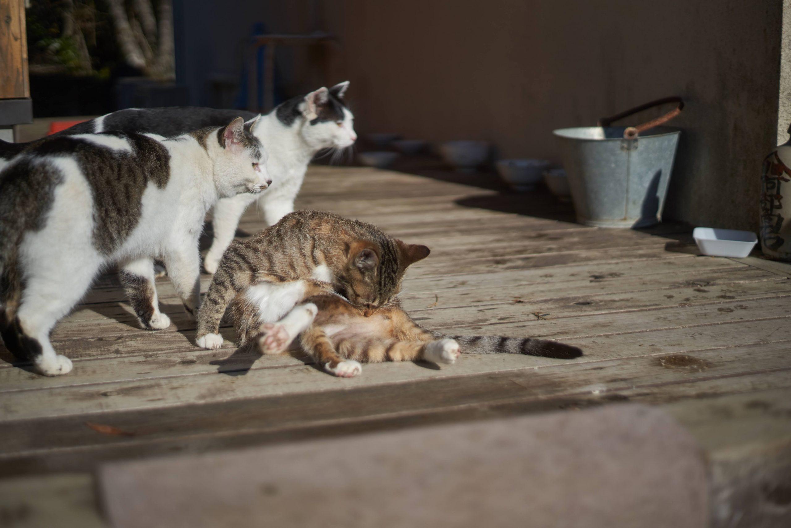 【SONY】東北の猫島へ【ねこまみれ】