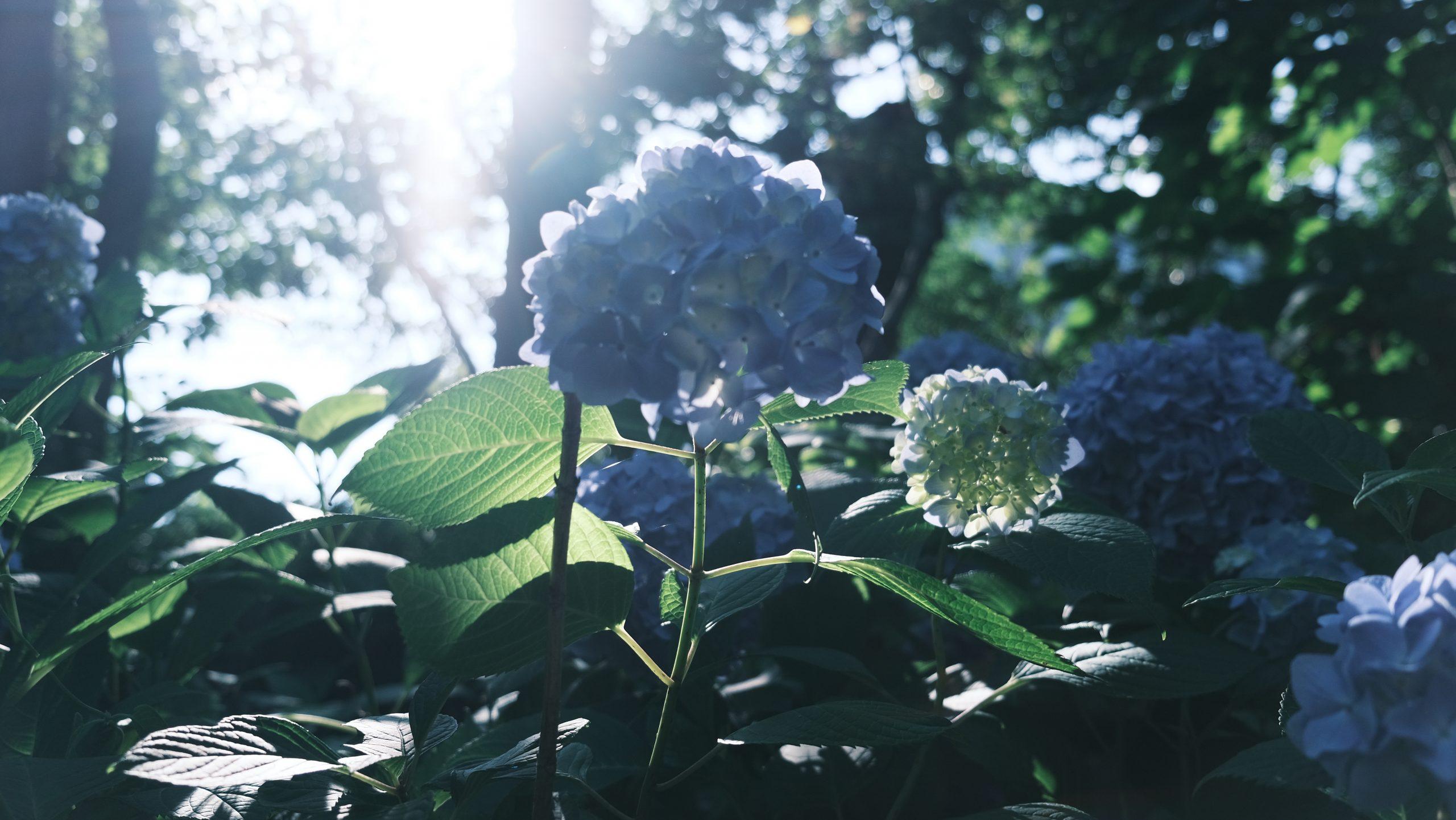 【FUJIFILM】梅雨晴れの公園散策