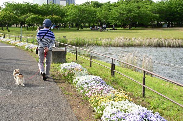 【Nikon】Z6IIと24-70mmF4Gを携えて北総の花々をながめつつ散歩する。