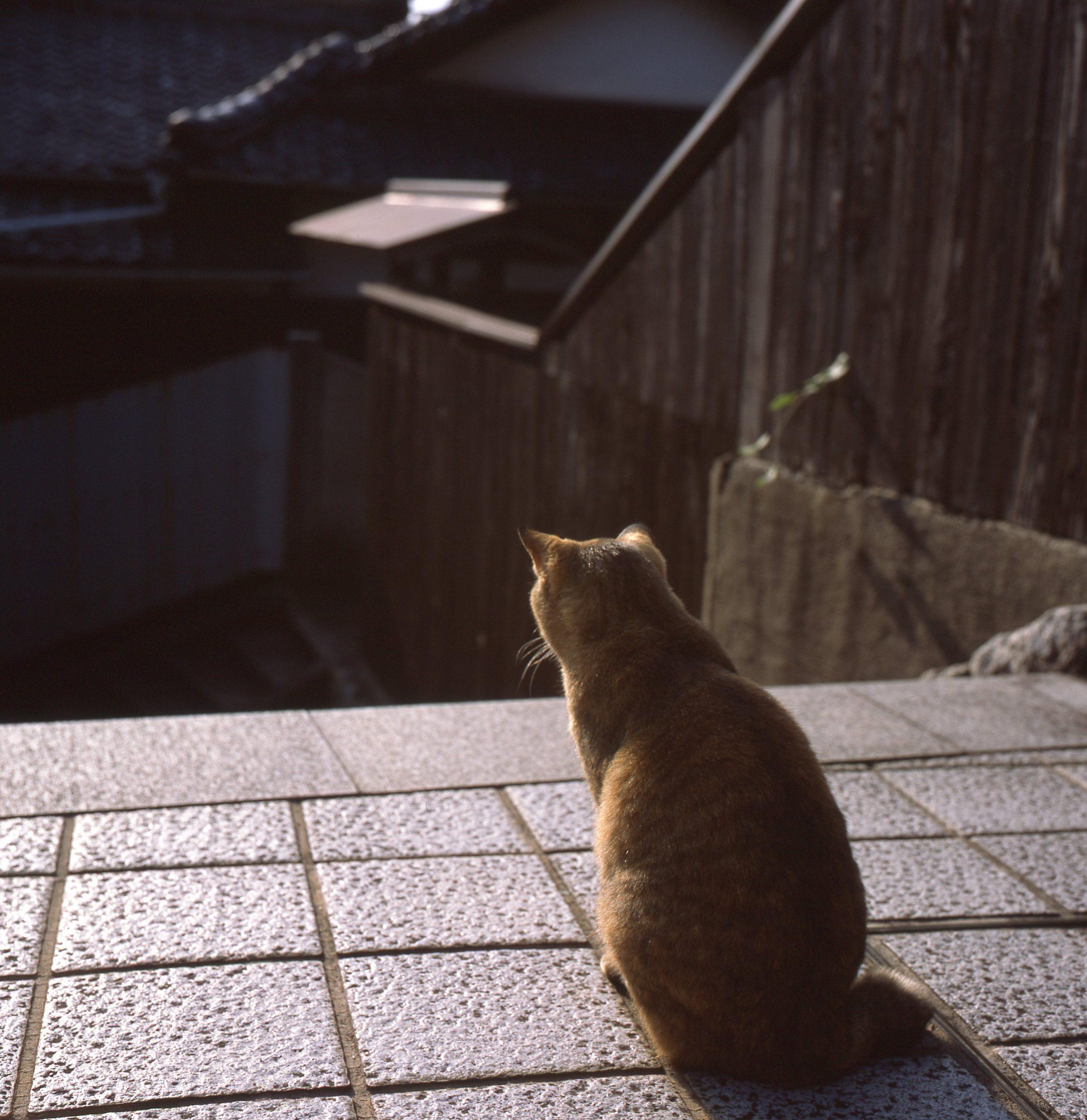 フィルムカメラで一期一会の猫を撮る