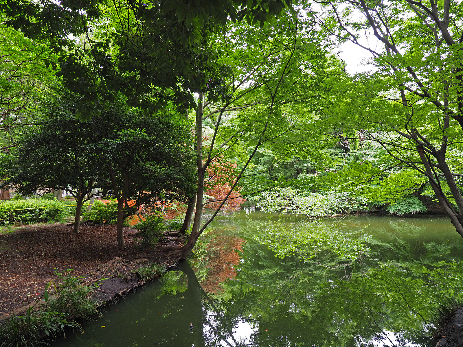 【OLYMPUS】OM-D E-M1 Mark IIで撮り歩き in 和田堀公園