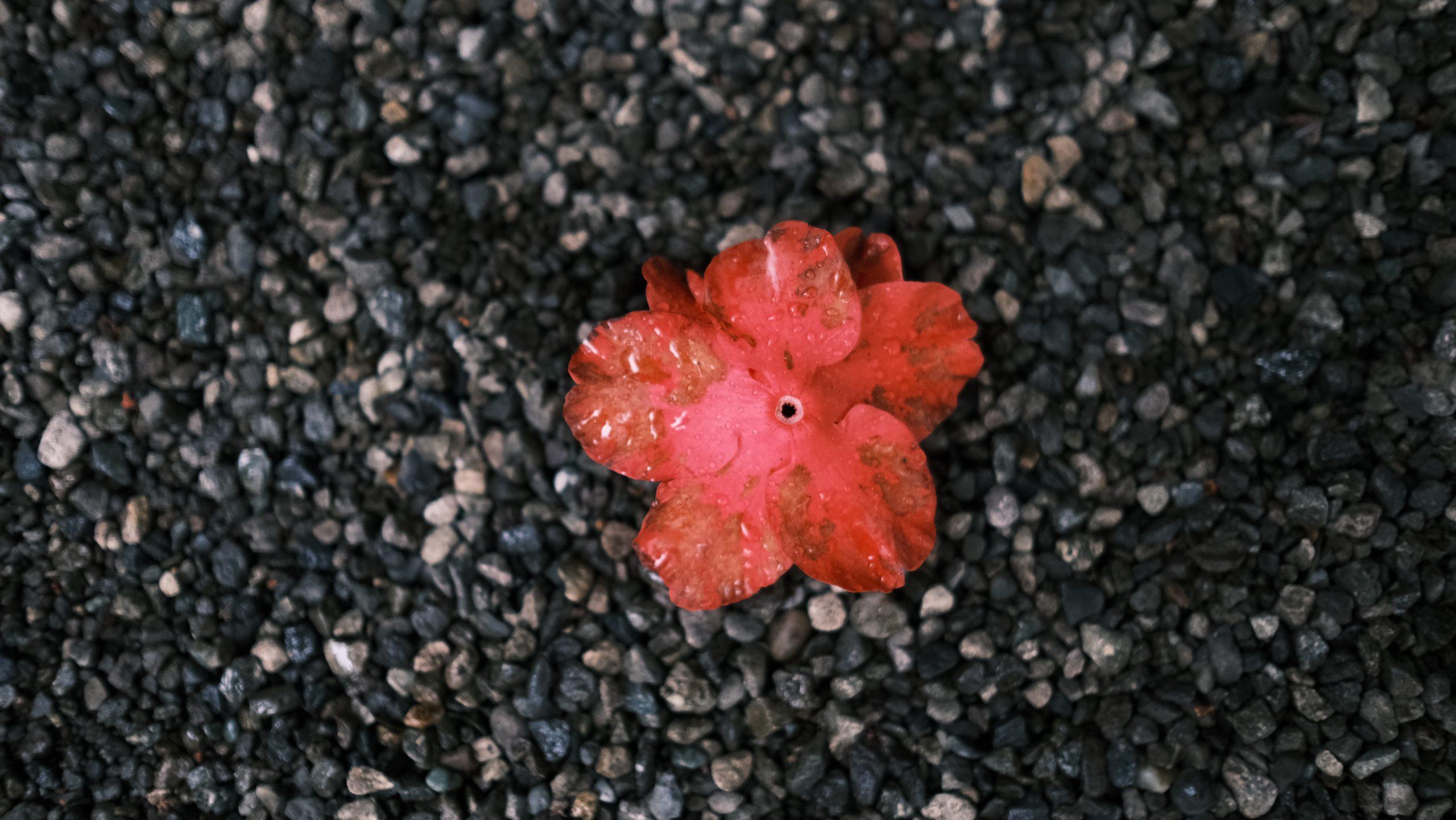 【FUJIFILM】雨の庭園~XF 23mm F1.4 R~