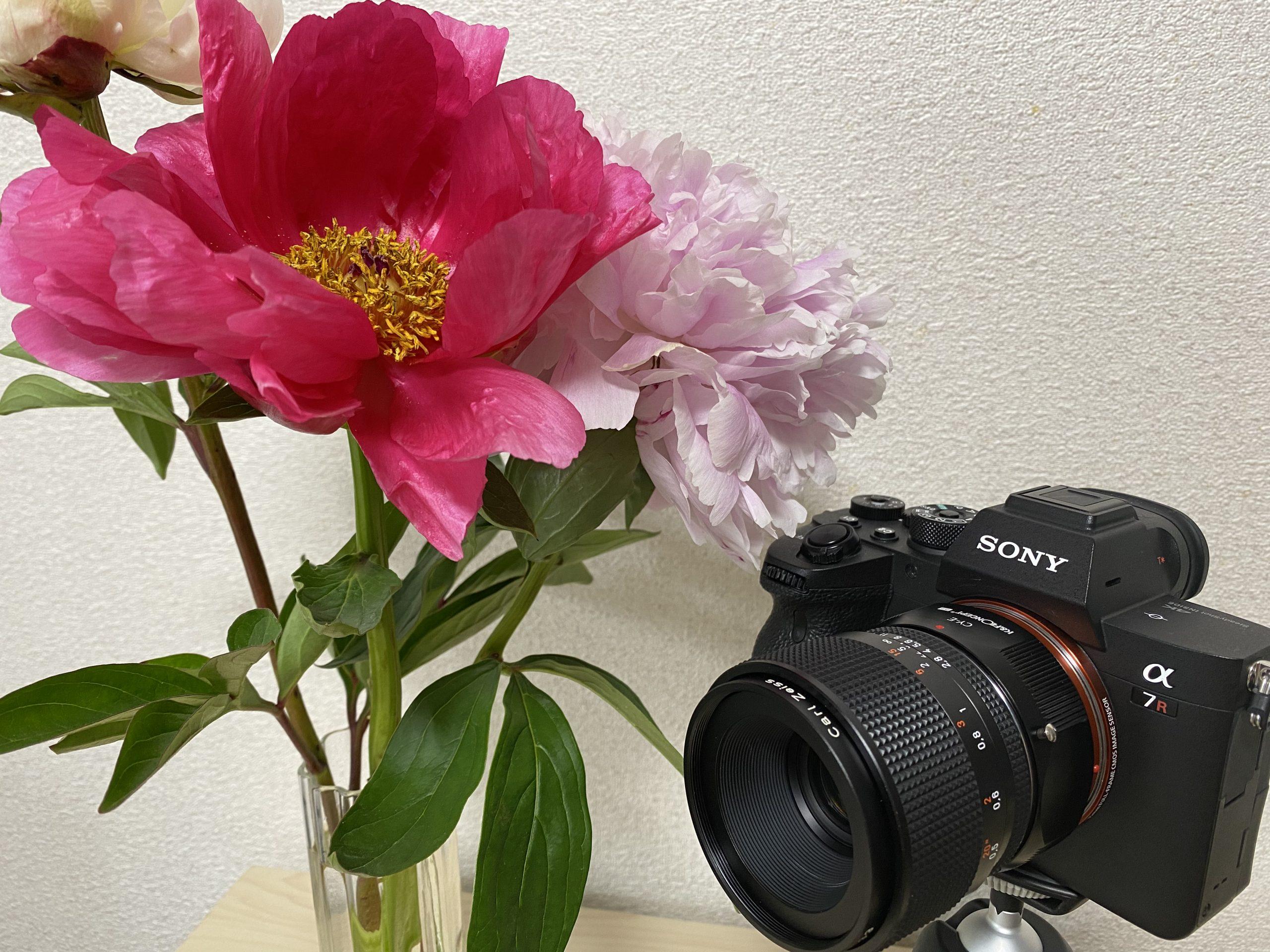 【SONY】a7RIV × CONTAX  Makro-Planar T*60mm F2.8 C MM で動画撮影