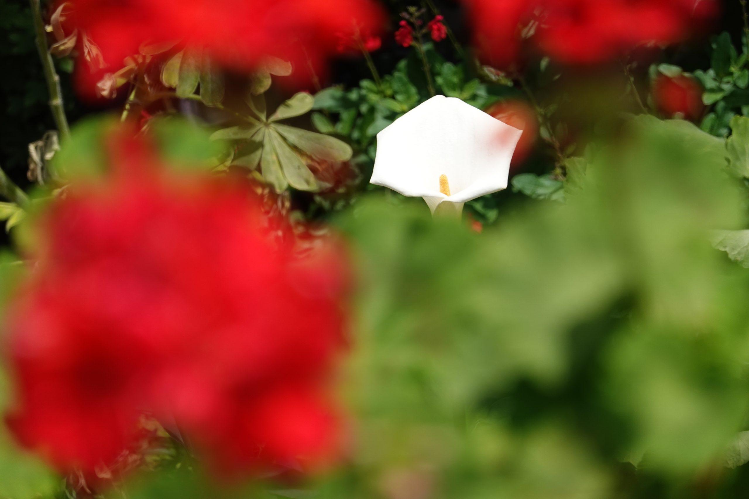 【SONY】RX100M7で花とか撮った日のこと