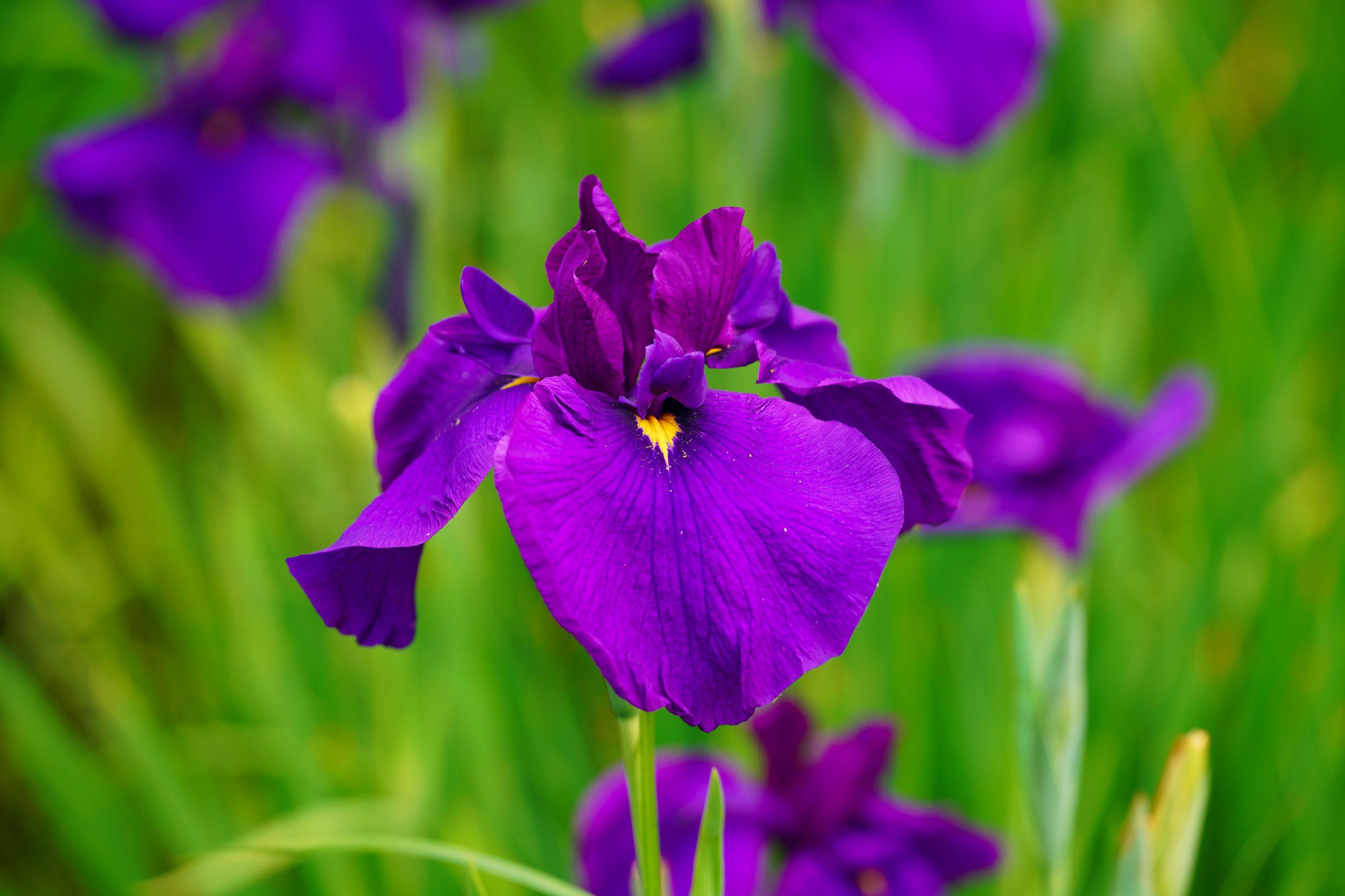 【SONY】この季節に咲く花(28)