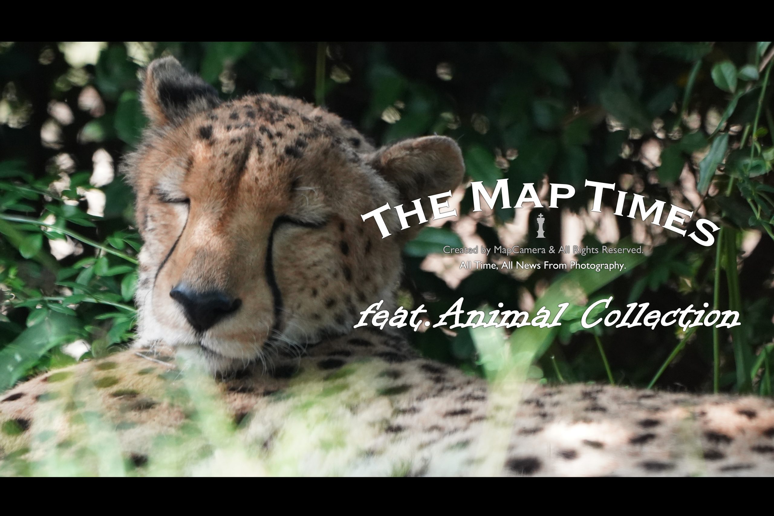 【SONY】アニコレ~Animal collection~Part4.5