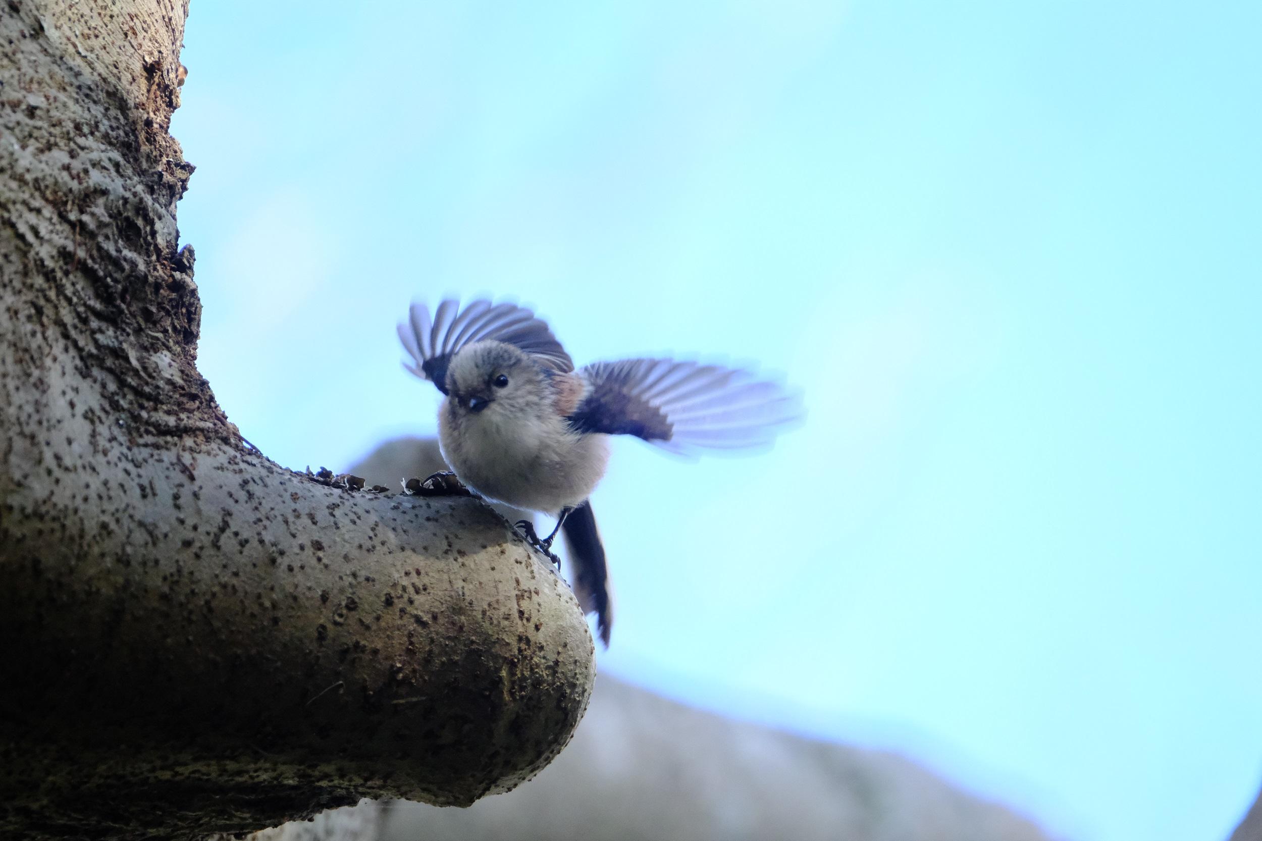 【FUJIFILM】X-T4で野鳥撮影