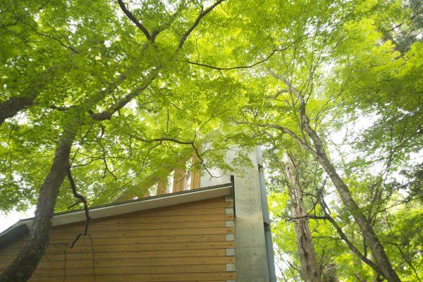 【七工匠】春蝉の合唱と新緑を「7artisans 25mm F1.8」で撮ってみた!動画編