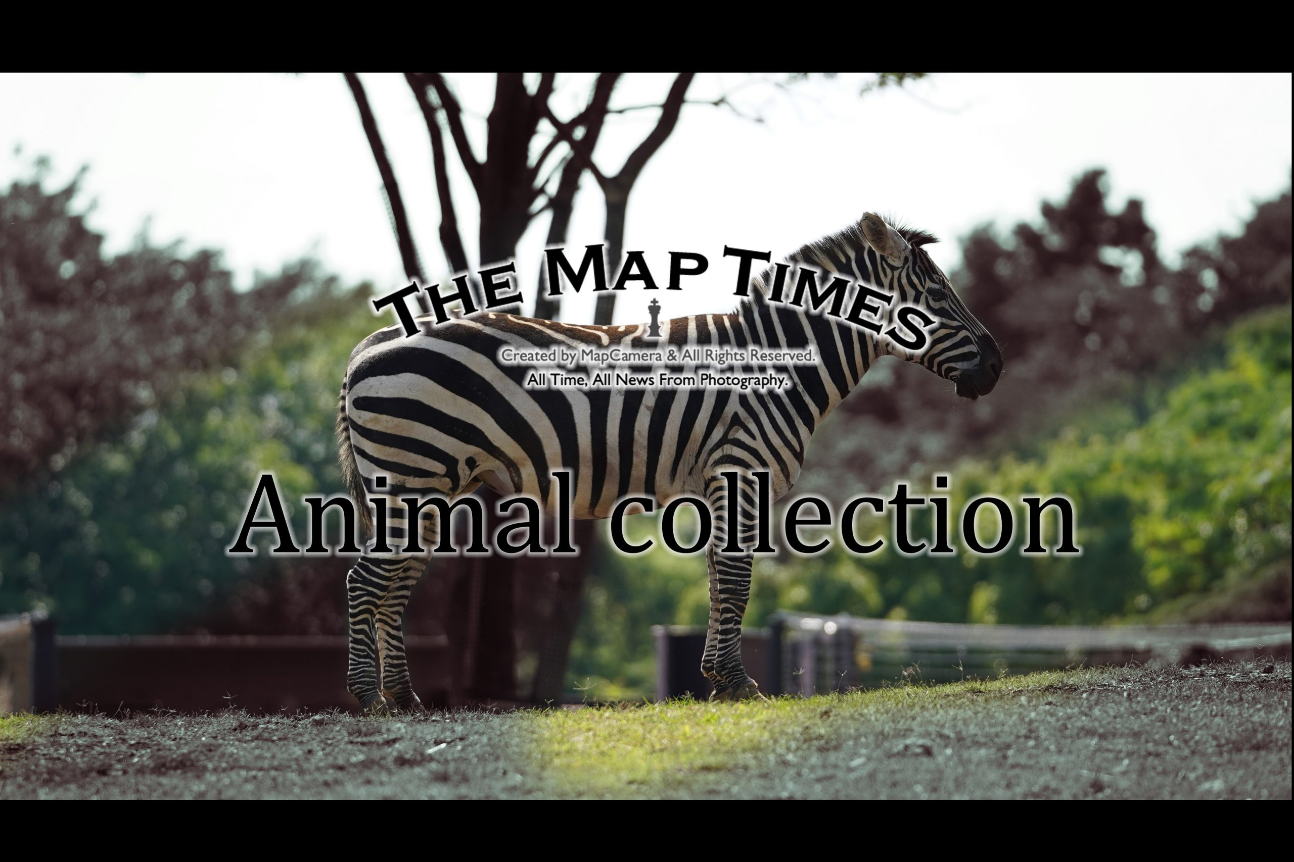 【Adobe】アニコレ~Animal collection~Part6