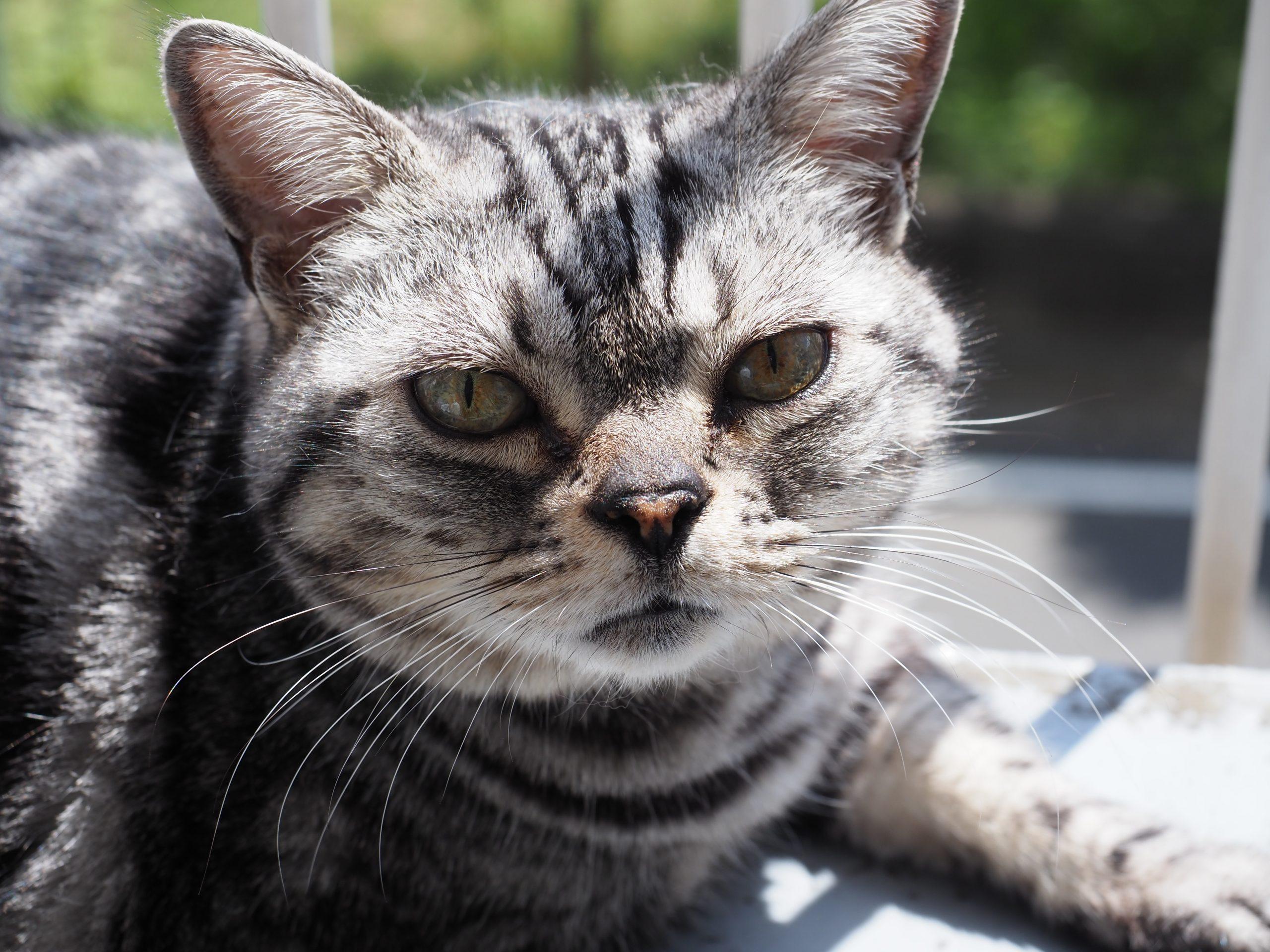 【OLYMPUS】OM-D E-M1 Mark II vs 猫