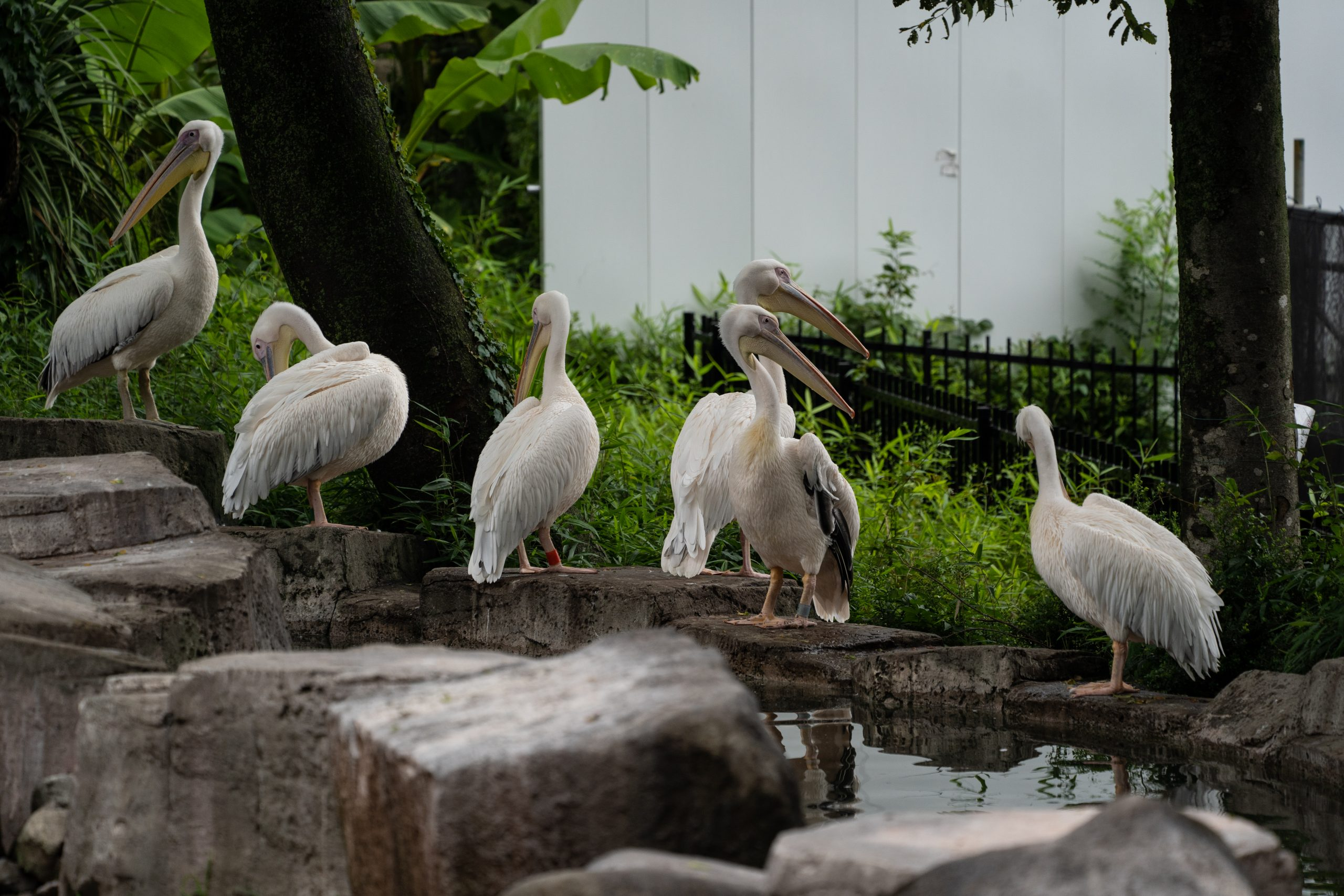 【SONY】雨の日の動物園