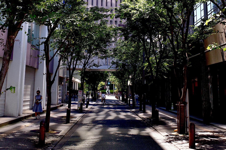 【RICOH】GR IIIと夏の道