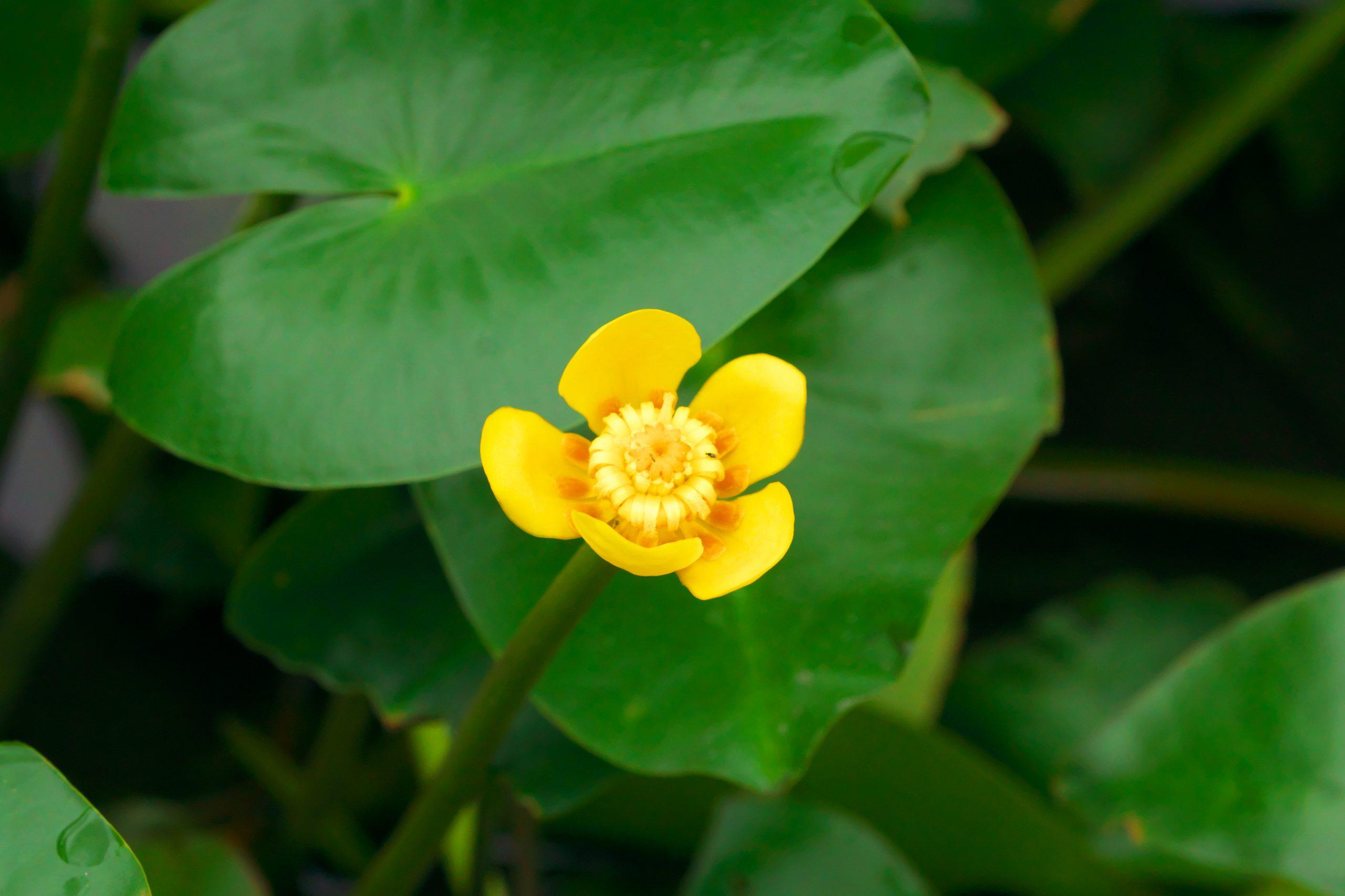 【SONY】この季節に咲く花(33)