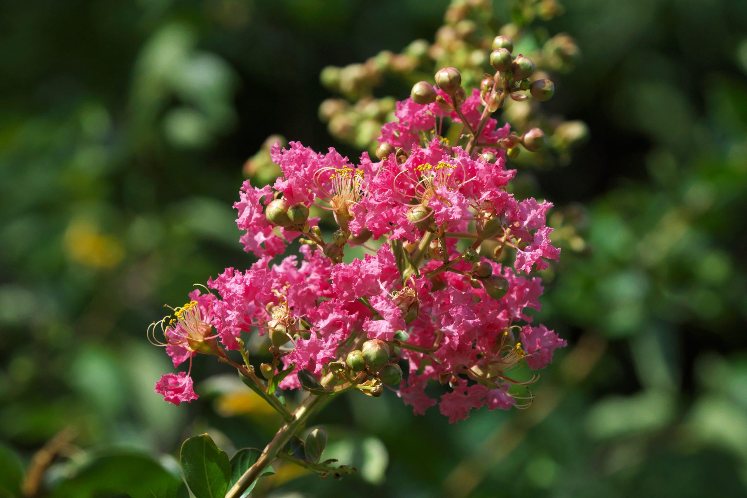 【SONY】この季節に咲く花(32)