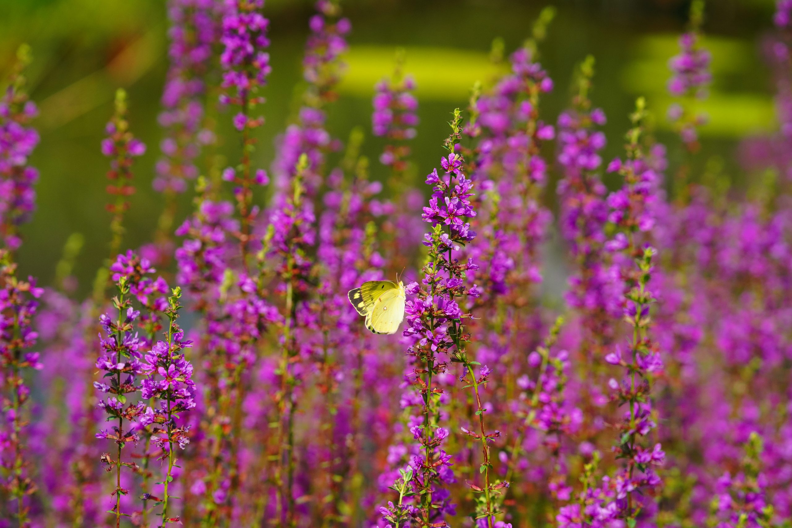 【SONY】この季節に咲く花(34)