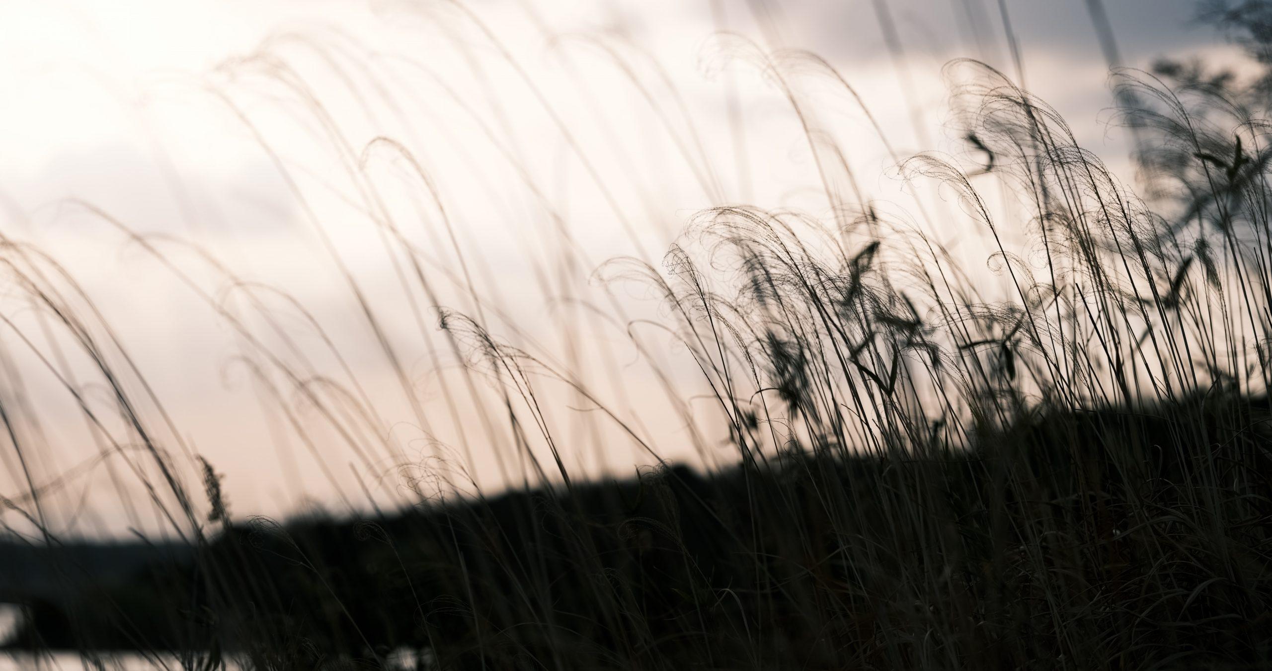 【FUJIFILM】 GFX100Sの4K動画で狭山の湖を撮る