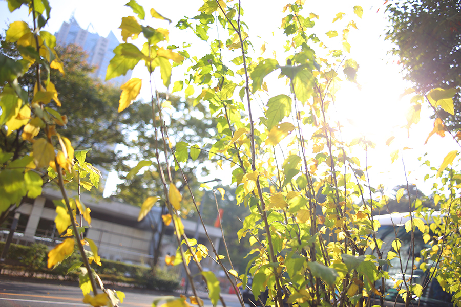 CONTAX (コンタックス) Distagon T*28mm F2.8 MM