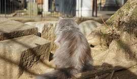 【SONY】つれづれ猫散歩。