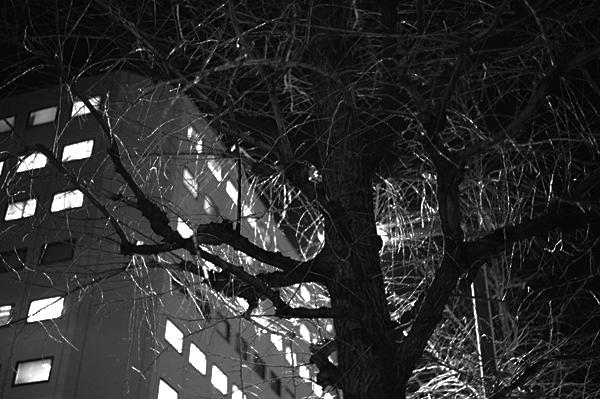 Leica M-E + ズミクロン M50mm F2