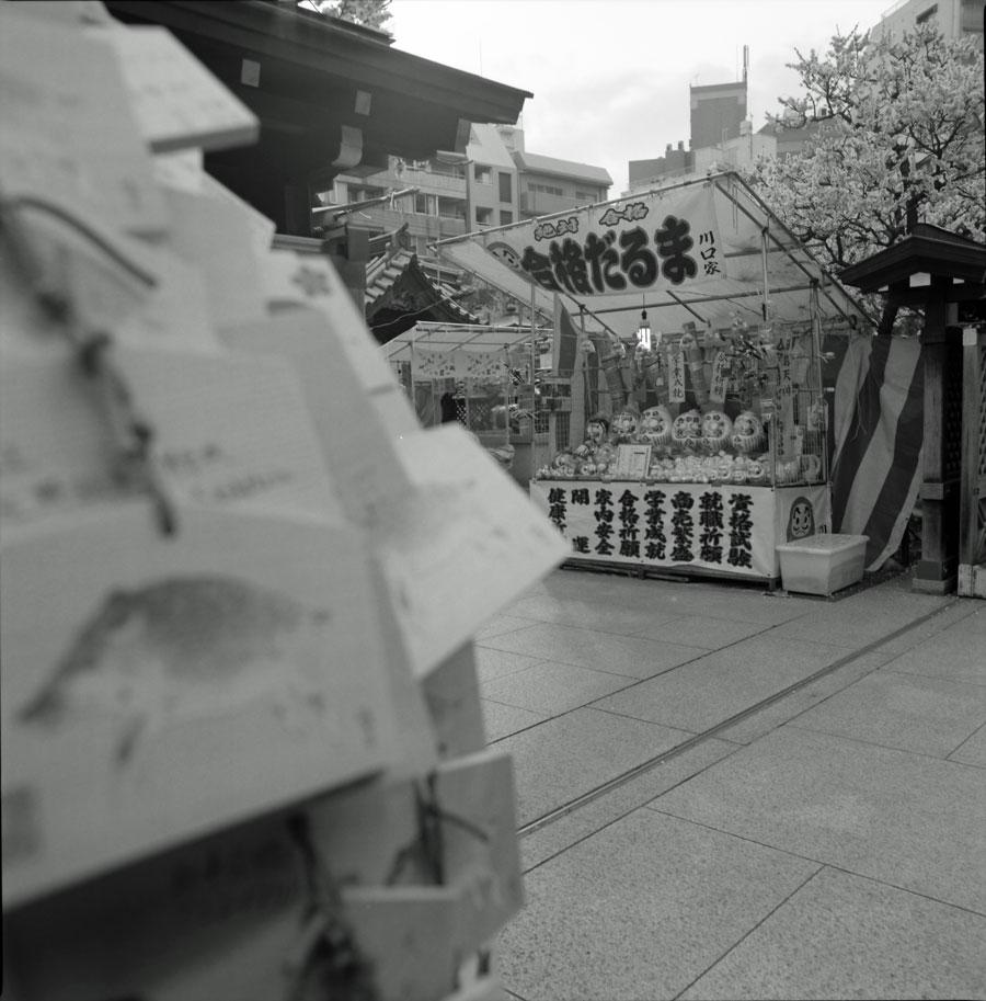 500C/M + プラナーC80mm F2.8