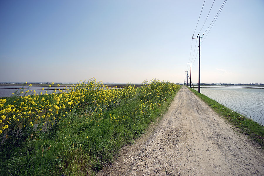 CONTAX (コンタックス) Distagon T*18mm F4