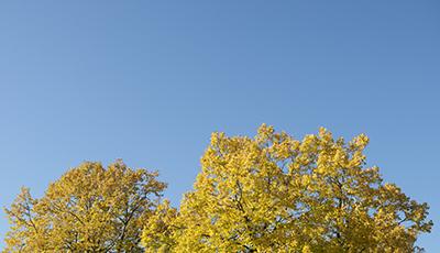 【11月30日はカメラの日】瑞々しい色