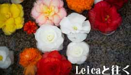 【Leica】ライカと往く