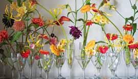 【写真を楽しむ6月】花と器のハーモニー