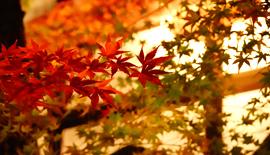 【SONY】RX100M7で巡る秋の京都