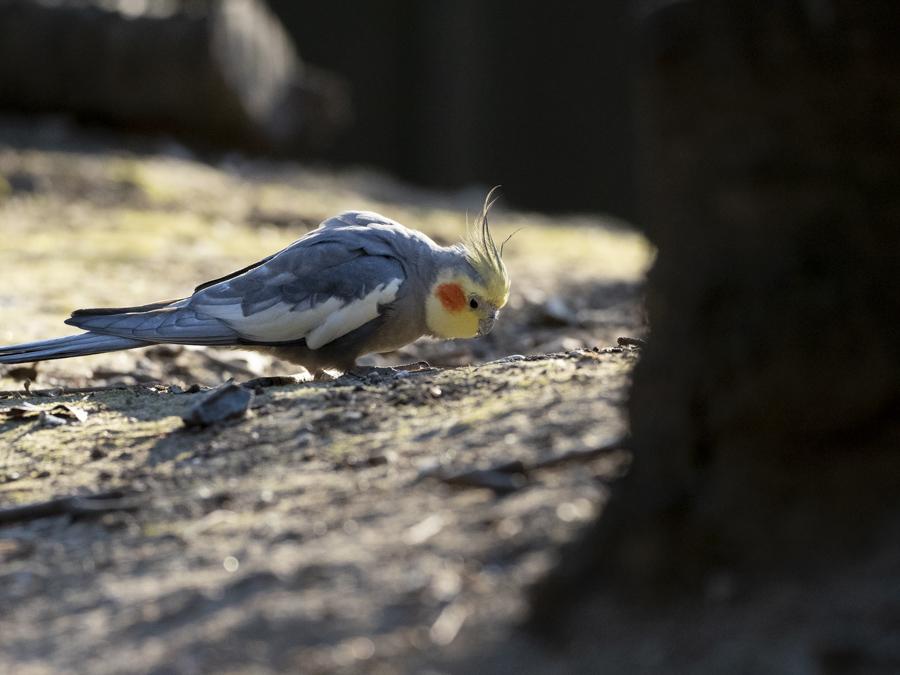 キャンベルタウン野鳥の森にて