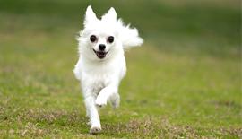 【SONY】遂に始動!驚愕の動物リアルタイム瞳AFの実力!(実写作例多数掲載)