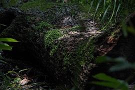 【写真を楽しむ6月】初夏の森を歩く