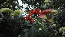 【SIGMA】熱帯植物園