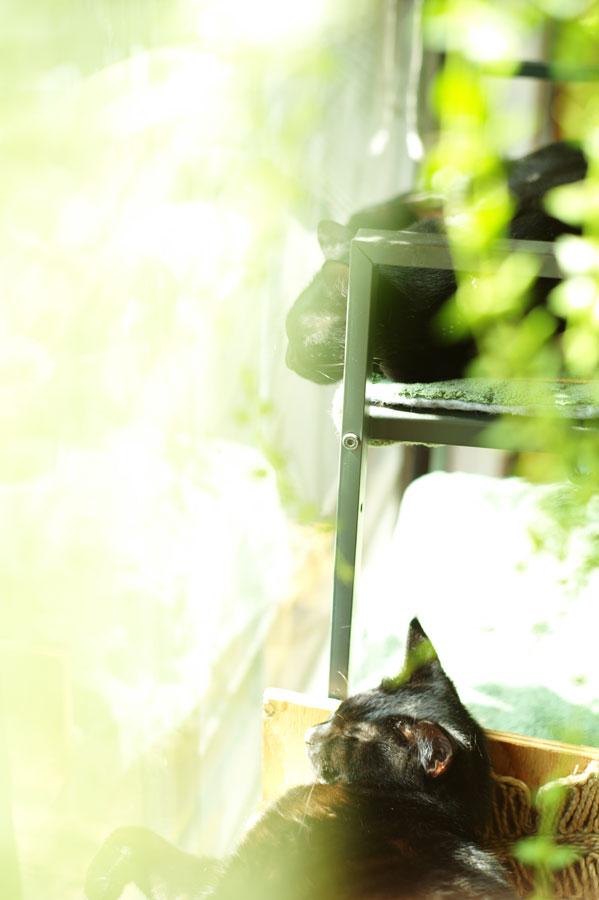 Leica M9 + Leica Summicron 50mm F2 2nd