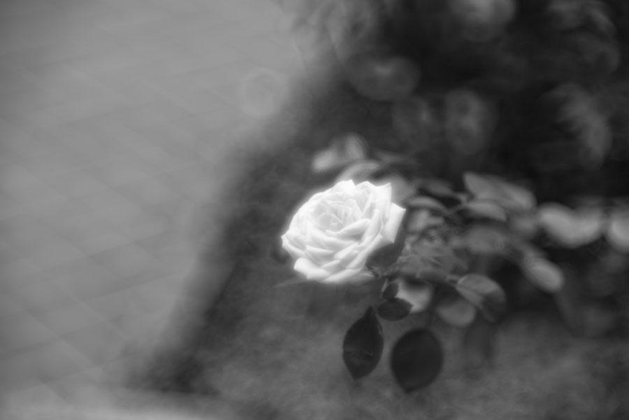 Leica M Monochrom(typ246) + Thambar M90mm F2.2