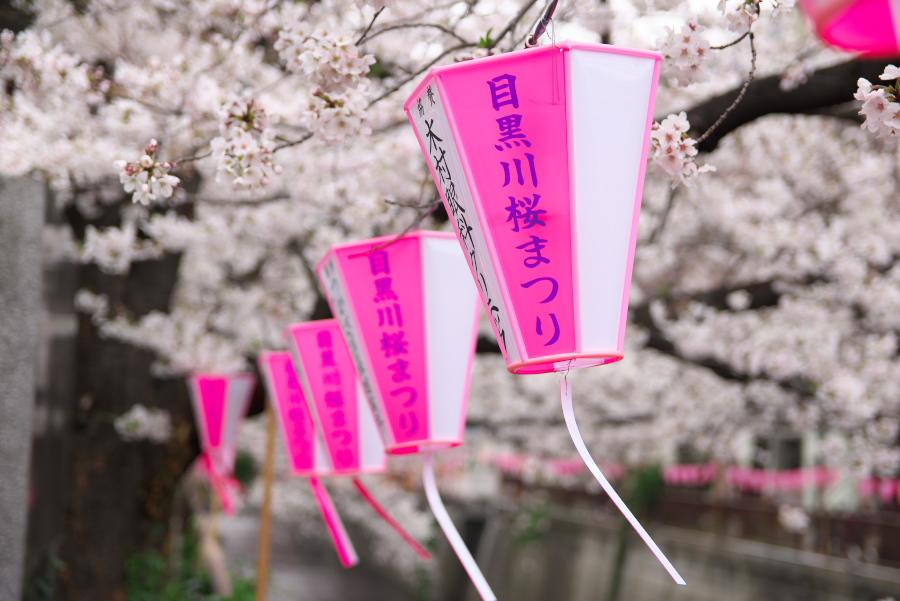【新元号令和、平成31年間を振り返る】平成最後の目黒川桜まつり