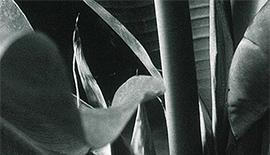 写真展のご案内 〜「ETHER」-エーテル- ゼラチンシルバープリントによるモノクロームの植物群~