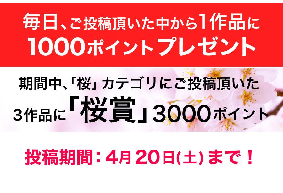 毎日1作品に1000ポイントプレゼント