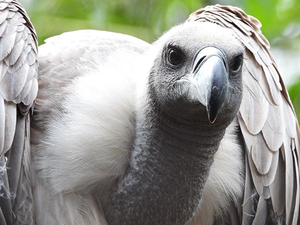 COOLPIX P1000と鳥