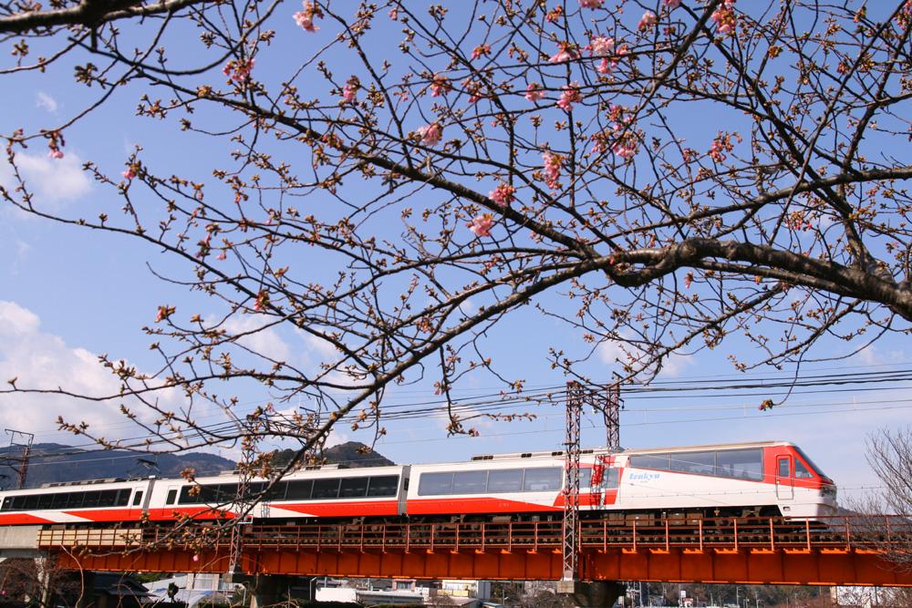 河津桜と2100系「リゾート21」