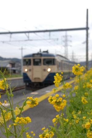 早くも春を迎えた和田浦駅