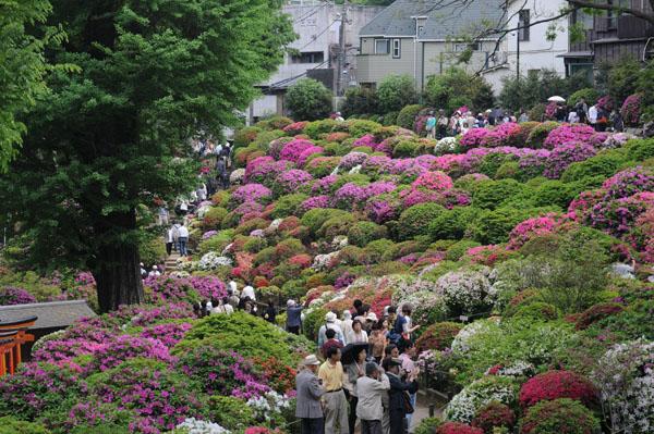 根津神社のつつじ園