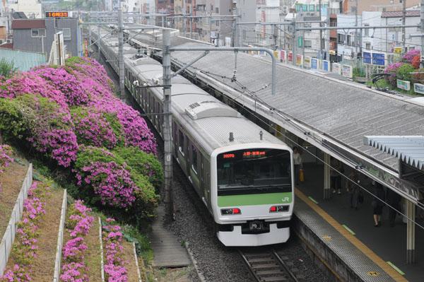 駒込駅舎から見下ろすツツジ