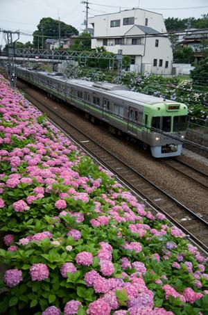 ライトグリーンの1000系(東松原~新代田にて)