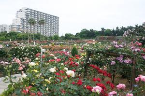 谷津バラ園
