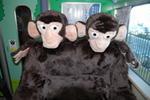 チンパンジー(3号車)