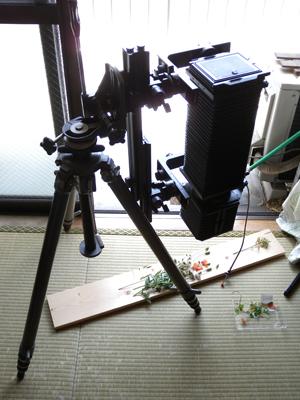 Polaroid Type55