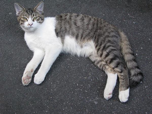 マップカメラの近くにいつもいる猫