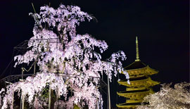 【Nikon】新世代の本格ズーム FX24-70mm & 驚異のD810 ~ 光の夜桜 ~