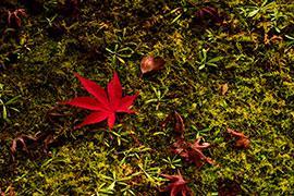 【Nikon】 D500で撮る風景写真 〜京都 秋の色〜